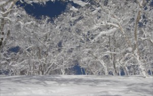 snow_in_the_trees