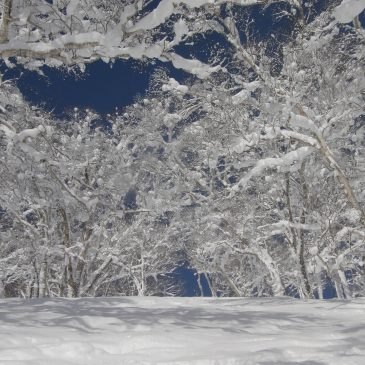 Niseko Snow Report